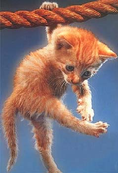 acrobatie canine!