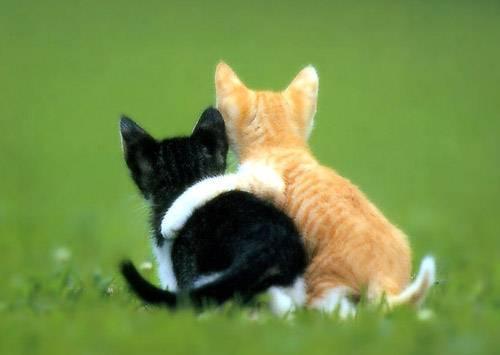 Amis pour toujours !