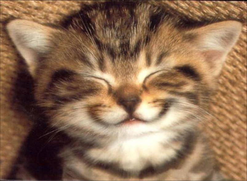 chat sourire/cat smile