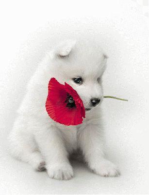 voici une fleur chiot chiens chats animaux comiques funfou. Black Bedroom Furniture Sets. Home Design Ideas