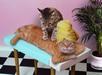 Massage !