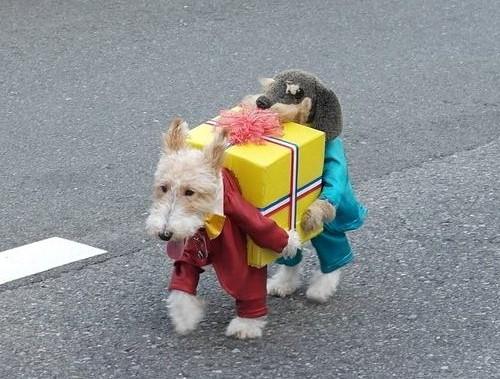 """Résultat de recherche d'images pour """"chien comic"""""""