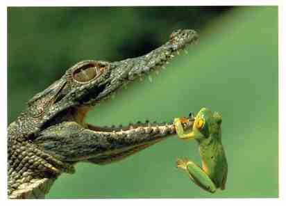 Extrême amitié !