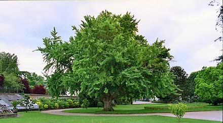 L arbre souhaits - L arbre a souhait ...
